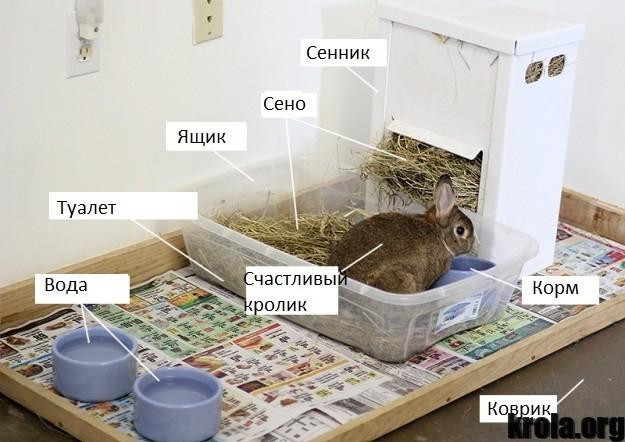 Своими руками домик для кроликов