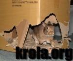 coco_cardboard-150x125