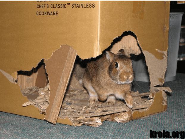 rabbit plays4